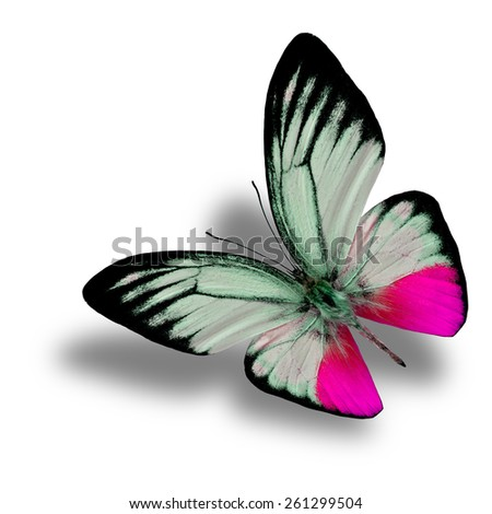 Beautiful Flying Pink Butterfly (Orange Gull in fancy color) with soft shadow beneath isolated on white background - stock photo