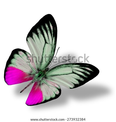 Beautiful flying pink butterfly, the orange gull butterfly in fancy color profile on white background with nice soft shadow beneath - stock photo