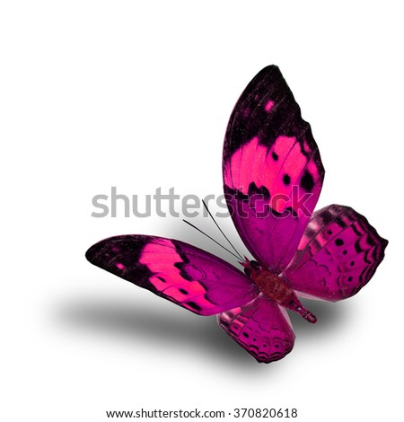Beautiful flying pink butterfly, the Rustic butterfly (Cupha bilberg) in fancy color profile with soft shadow beneath - stock photo