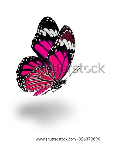 Beautiful flying pink butterfly with soft shadow beneath on white background - stock photo