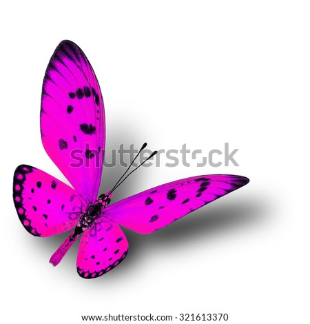 Beautiful flying pink butterfly with soft shadow beneath on white background, fire butterfly - stock photo