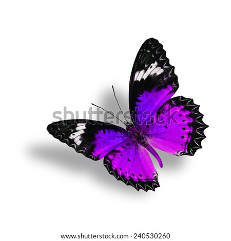 Beautiful Flying Purple Butterfly (Leopard Lacewing) with soft shadow beneath on white background - stock photo