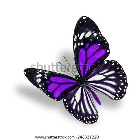 Beautiful flying purple butterfly, white tiger in fancy color profile, with soft shadow beneath - stock photo