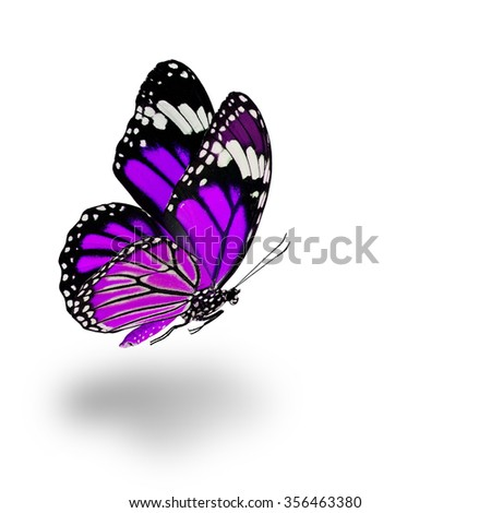 Beautiful flying purple butterfly with soft shadow beneath on white background - stock photo