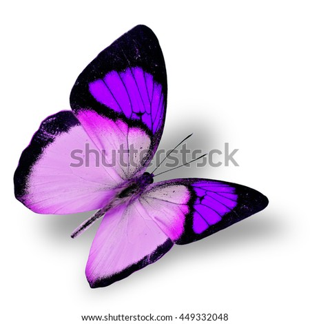 Beautiful flying purple butterfly, yellow orange tip butterfly in fancy color transparency with soft shadow beneath - stock photo