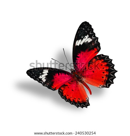 Beautiful Flying Red Butterfly (Leopard Lacewing) with soft shadow beneath on white background - stock photo