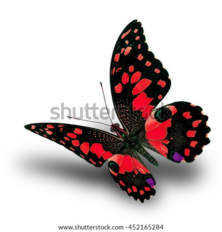 Beautiful flying red butterfly, Lime butterfly (Papilio demoleus) in fancy color profile on white background with soft shadow beneath - stock photo