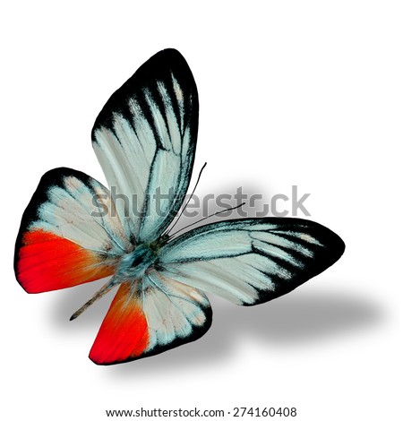 Beautiful flying red butterfly on white background with nice soft shadow beneath - stock photo