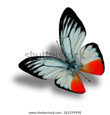 Beautiful Flying Red Butterfly (Orange Gull in fancy color) with soft shadow beneath isolated on white background - stock photo