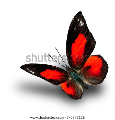 Beautiful flying red butterfly, the Bright Sunbeam or Malayan Sunbeam butterfly in fancy color with shadow beneath on white background - stock photo