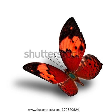 Beautiful flying red butterfly, the Rustic butterfly (Cupha bilberg) in fancy color profile with soft shadow beneath - stock photo