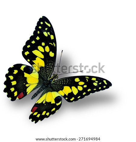 Beautiful flying yellow butterfly, the Lime butterfly - stock photo