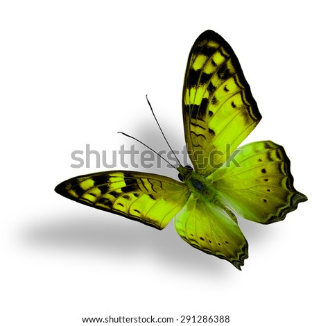 Beautiful flying yellow butterfly, The Vagrant Butterfly stretches its back wings profile in fancy color isolated on white bacground with soft shadow beneath - stock photo