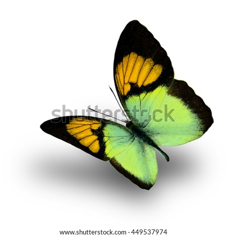 Beautiful flying yellow butterfly, the Yellow Orange Tip (Ixias pyrene) on white background with soft shadow beneath - stock photo