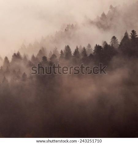 Beautiful fog in a Carpathian misty forest - stock photo