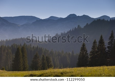 beautiful fog in mountains, fir forest around - stock photo