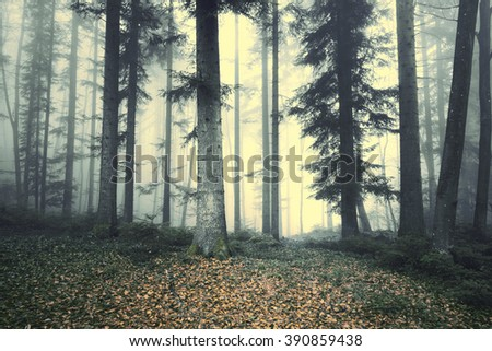 Beautiful foggy forest tree fairytale. Magic foggy light in forest.