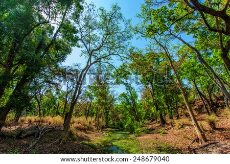 Beautiful forest and stream in the Bandhavgarh National Park in India. Bandhavgarh is located in Madhya Pradesh, it has the biggest bengal tiger population of the world. - stock photo