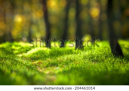 Beautiful forest background. Grass and trees. Bokeh effect.