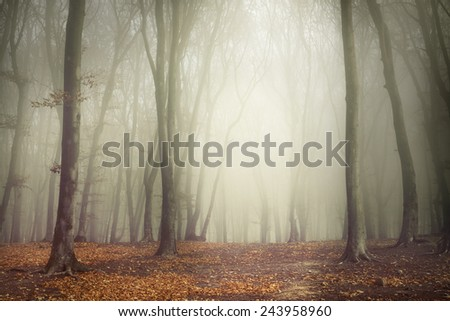 Beautiful forest during an autumn foggy day - stock photo