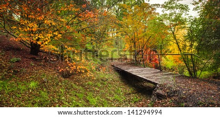 Beautiful forest full of autumn colours - stock photo