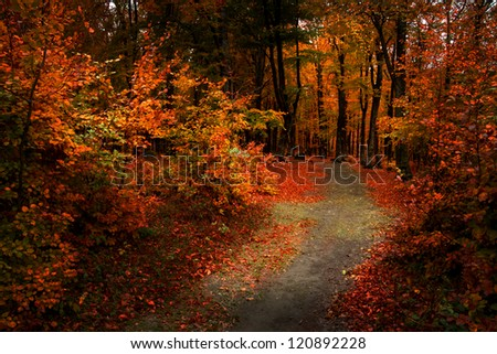 Beautiful forest in a late November autumn day - stock photo