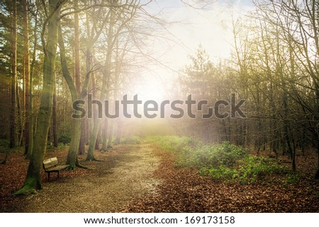 Beautiful forest in Essex uk England at fall  - stock photo
