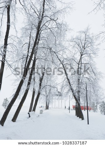 beautiful forest in winter