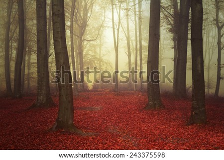 Beautiful forest into a misty day - stock photo