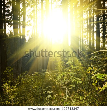beautiful forest landscape at sunset