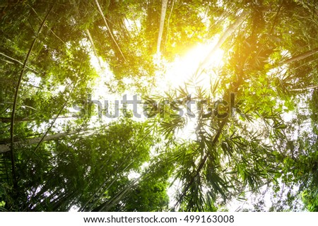 Beautiful forest landscape in the morning-Fisheye view