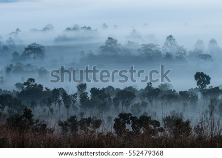 Beautiful forest landscape of foggy sunrise in Thung salaeng Luang National Park (Nong Mae na), Thailand