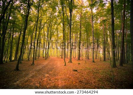 Beautiful forest near Rzeszow city, Poland - stock photo