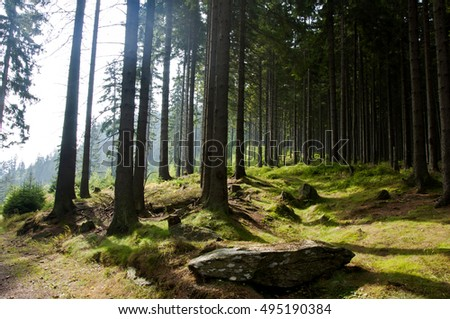 Beautiful forest scenery. Trees in deep green forest.