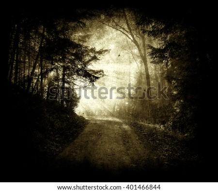 Beautiful forest wallpaper, Forest Road Under Sunset Sunbeams