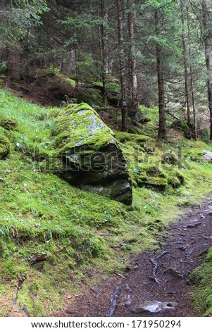 beautiful forest with moss and stones - stock photo