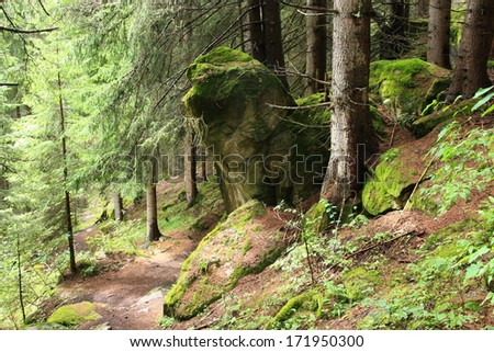 beautiful forest with moss and stones