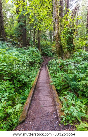 beautiful  forest with path,scenic view of second beach in mt Olympic National park,Washington,USA.