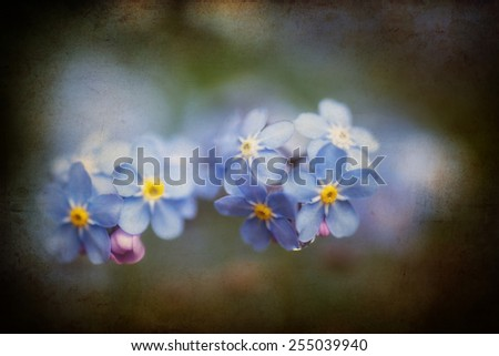 Beautiful forget-me-not Spring flowers with textured and vignette effect added - stock photo
