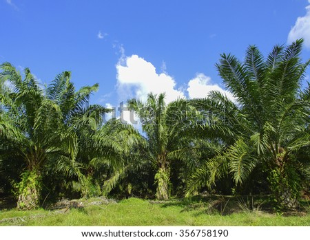 Beautiful formation of palm tree under deep blue sky