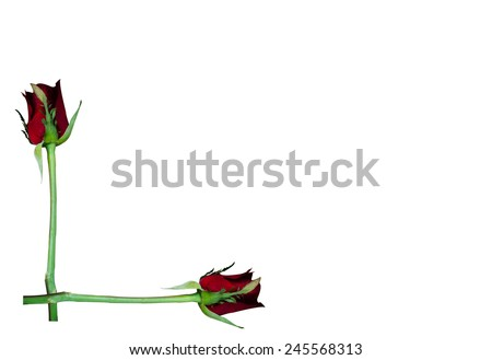 Beautiful Frame Made Red Rose Flower Stock Photo (Download Now ...