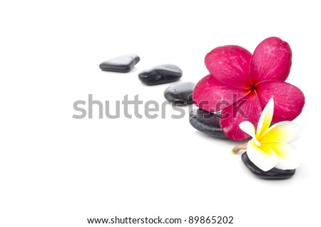 beautiful frangipani flower with spa stone isolated white background