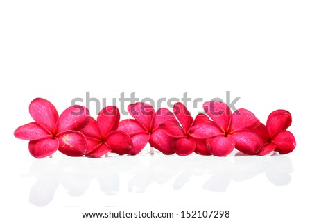 Beautiful Frangipani flowers - stock photo