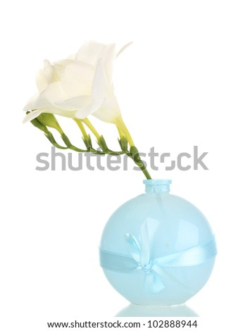 Beautiful freesia in vase isolated on white - stock photo