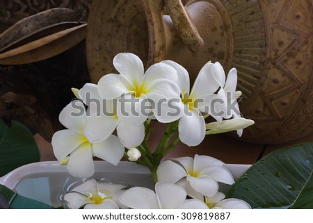 beautiful fresh charming white flower plumeria bunch floated on water with classic dark background of vintage and boutique style decoration for spa decor or picture gallery