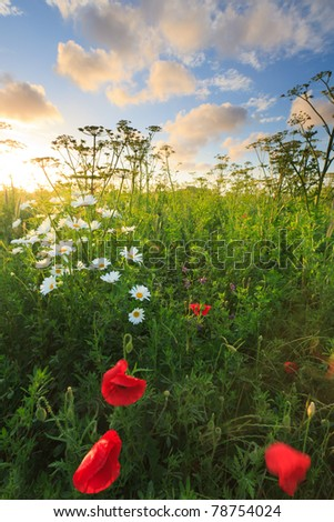Beautiful fresh field of flowers in summer