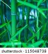Beautiful fresh green bamboo. Selective focus - stock photo