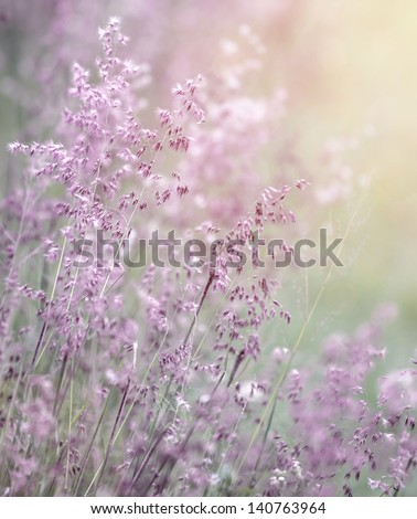 Beautiful fresh purple flowers field, abstract dreamy floral background, sun light, soft focus, spring season  - stock photo