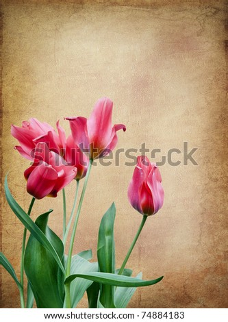 Beautiful fresh red tulips against retro grunge background
