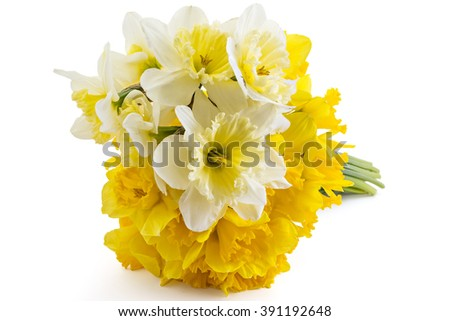 Beautiful fresh yellow narcissus bouquet isolated on white background - stock photo